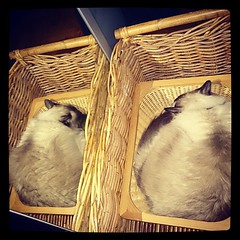 The Taco basket combo...