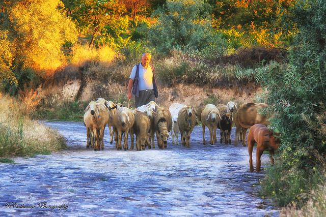 If he a shepherd!!!