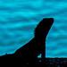 The Blue Dragon by nauticalnancy