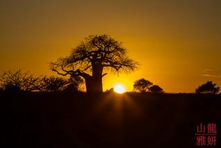 Sunset on Tarangire National Park | by DragonSpeed