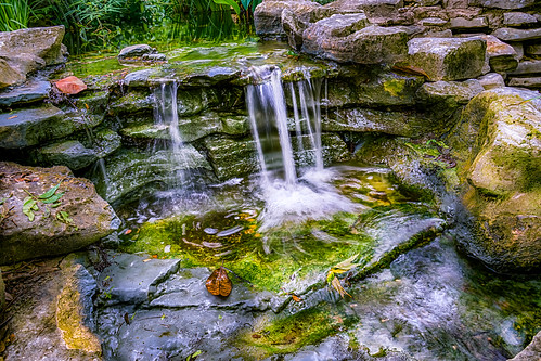 plant nature water leaves rock stone austin outside outdoors us waterfall pond texas unitedstates outdoor serene hdr zilkerbotanicalgardens