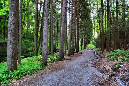 forest pa berkscounty a77 sonyalpha noldestateforest