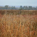 Early morning dew on the tallgrass prairie near Bobolink Trailhead.