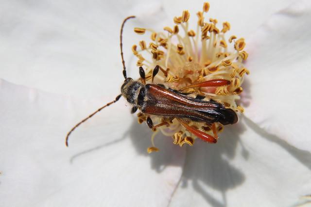 Beetles, Bugs & Flowers