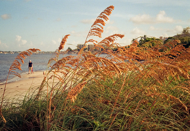 Sea of Sea Oats (Leicaflex SL)