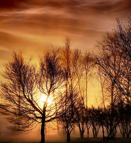 trees sky fog backlight vancouver clouds sunrise