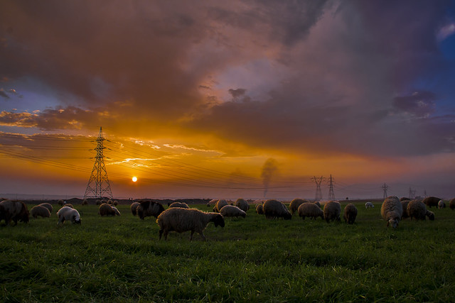 sunset in the sheep