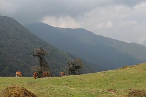Singalila Ridge Trail | by Matt Stabile