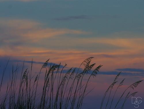 sky plants grass clouds skyscape sand florida destin cloudscape seaoats miramarbeach uniolapaniculata