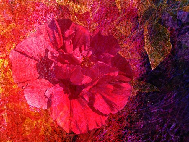Passionate Bloom