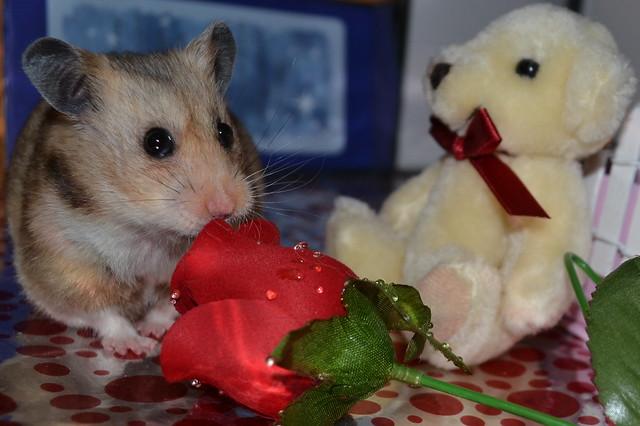 Happy valentines :)