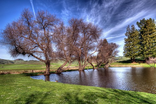 california trees sky clouds landscape pond marincounty 2015 scrapping61 marinfrenchcheesefactory