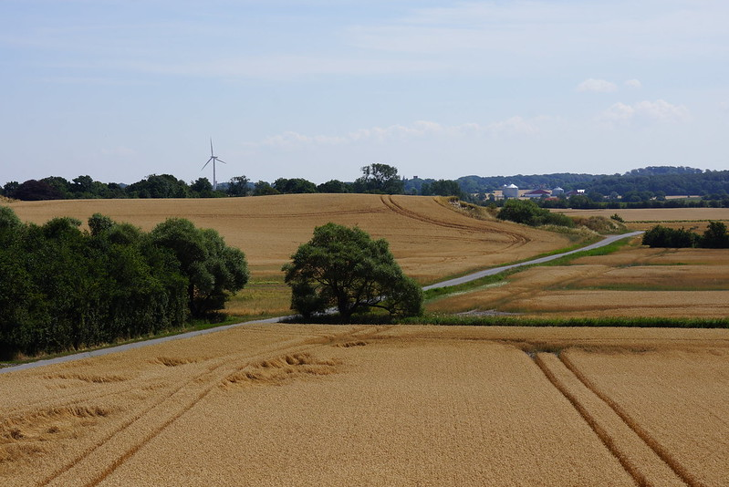Kaedeby-Haver-2014-07-24 (36)