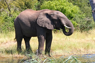 Elephant | by Mags' pics for everyone