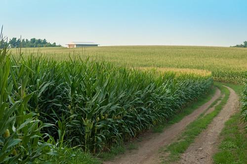 road field barn corn farm farming harvest dirt