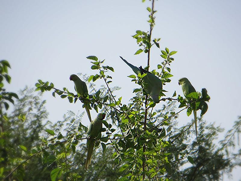 different birds @Achrol bagh