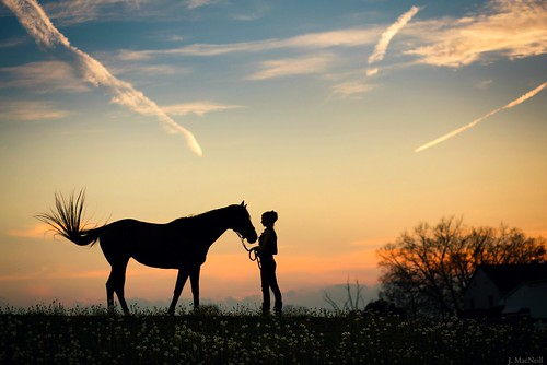 sunset sky horse woman evening contrail thoroughbred equine