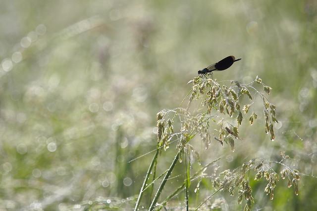 Biodiversity on a stalk