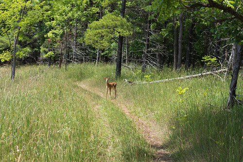 park ca trees baby ontario canada nature grass forest landscape hiking deer trail valley bambi boyne provincial shelburne conada