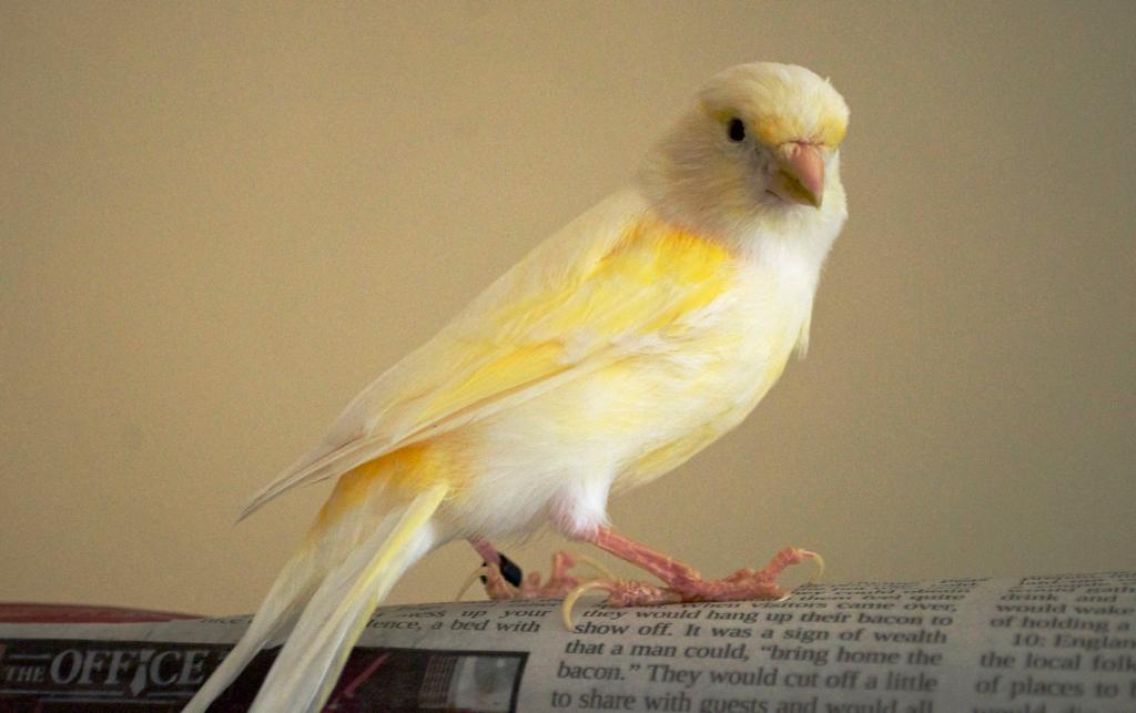 Canary Literacy
