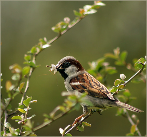 colour building bird canon nest sparrow 30d