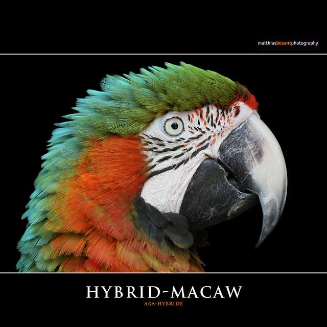HYBRID-MACAW