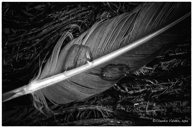 A feather in the storm