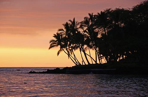 sunset usa seascape tree america canon landscape photography eos rebel hawaii kiss paradise united palm f states xs amerika paysage landschaft kona rik landschap 1000d tiggelhoven