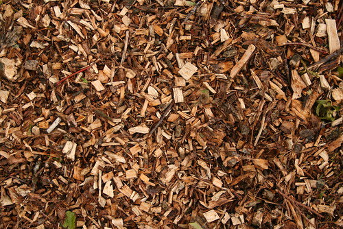 Bark used for landscape surfacing and mulching | by Owen P