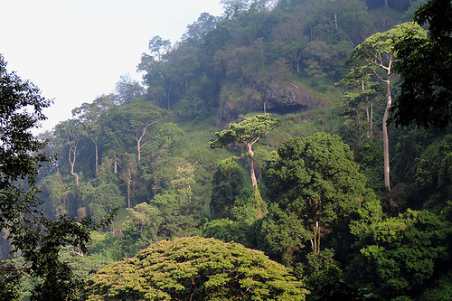 travel landscape tropics nature rainforest jungle trees flora ceylon srilanka southasia asia outdoor plant plants mountainside hill tree foothill dnysmphotography