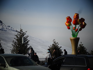 Giant tulips outside Khan Shatyr. | by meadowsaffron