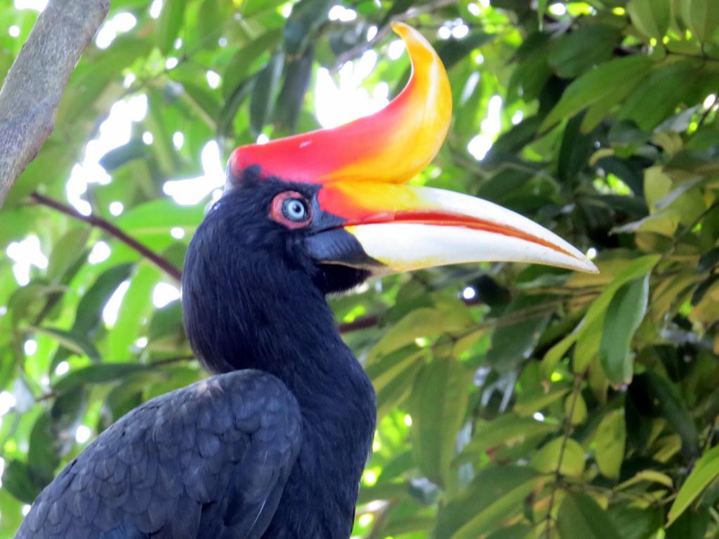 حديقة طيور كوالالمبور، أحد المزارات السياحية في مدينة كوالالمبور، ماليزيا