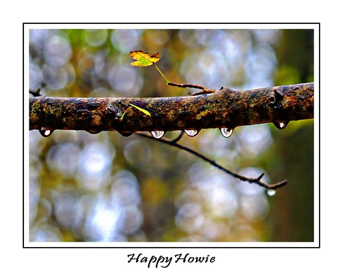 raindrops   by happyhowiephotography