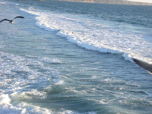 SURF AND GULL, HERMOSA BEACH BY R.L.HUFFSTUTTER | by roberthuffstutter
