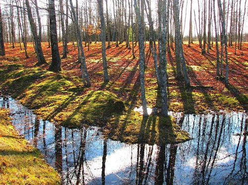 autumn trees light canada nature water leaves canon reflections pond shadows seasons country newbrunswick colourful maples