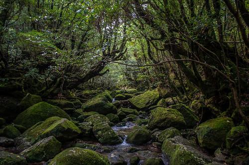 yakushima_03_DSC_0142 | by あlejandro