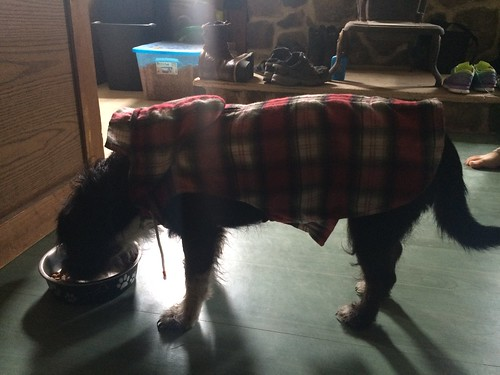 Self Drafted Dog Jacket