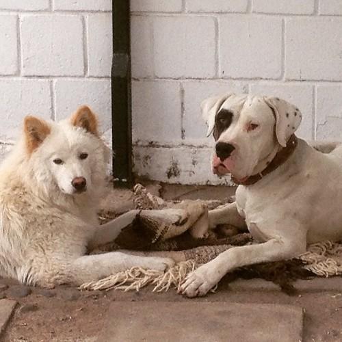 Kala and Diego