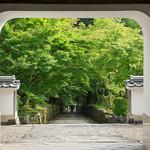 Kōshō-ji 興聖寺