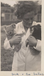 Marjorie Richards, of the English women's cricket team, holding two baby koalas at Melbourne Zoo, December 1934