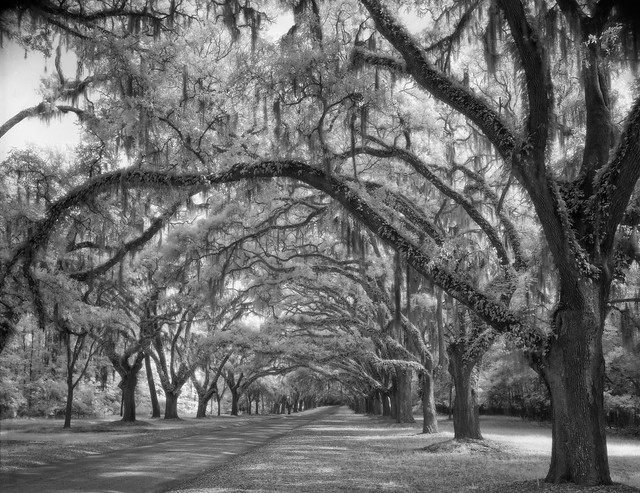 Calm Morning at Wormsloe