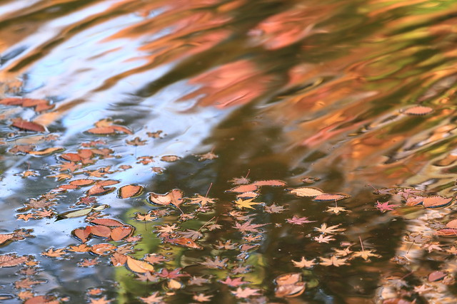 fallen leaves on the pond.