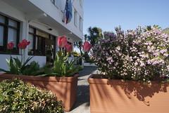 Terraza. Hotel Los Laureles