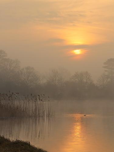 uk trees mist fog sunrise reeds landscape dawn foggy earlymorning explore serene tranquil malton northyorkshire lowcontrast bridesheadrevisited moorhen flickrexplore explored canon135mmf2 flickrexplored castlehowardlake canon5dmk3 markmullenphotography