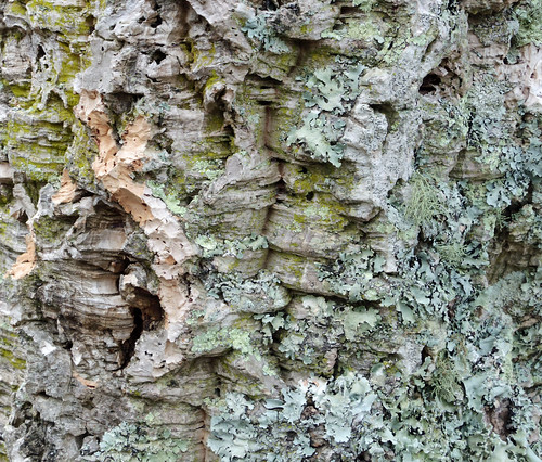 Bark of cork tree. Pentax Q and 02 lens | by aeomaster32