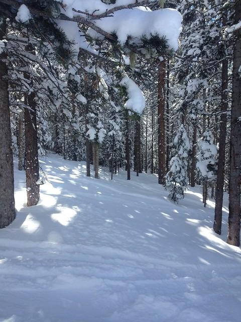 日, 2014-02-02 16:00 - Enchanted Forest Trail