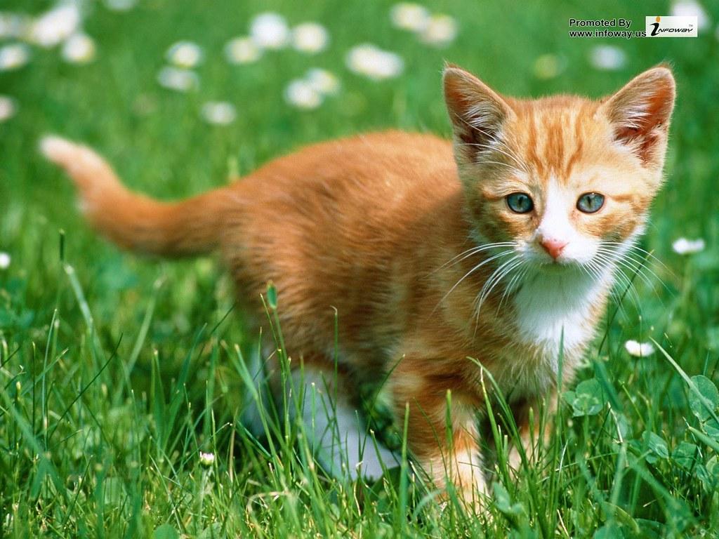 Wallpaper Cute Baby Cat Wallpaper Cute Baby Cat Flickr