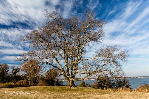 virginia yorkcounty yorktown trees majestictrees greatskies riversandstreams yorkriver february2015 february 2015 canon24704l