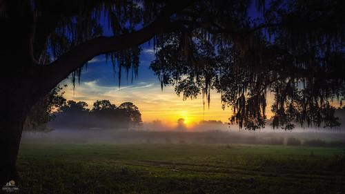 mist fog sunrise florida farmland nikond810