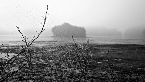 flickr foto photo image capture picture photography sony bw fog foggy nature island landscape water lake pond dark outdoor outdoors summer massachusetts sonydscw300 blackandwhite naturelover naturephotograph spiderweb turnpikelake washingtonstreet newenglandfog plainvillemassachusetts newengland